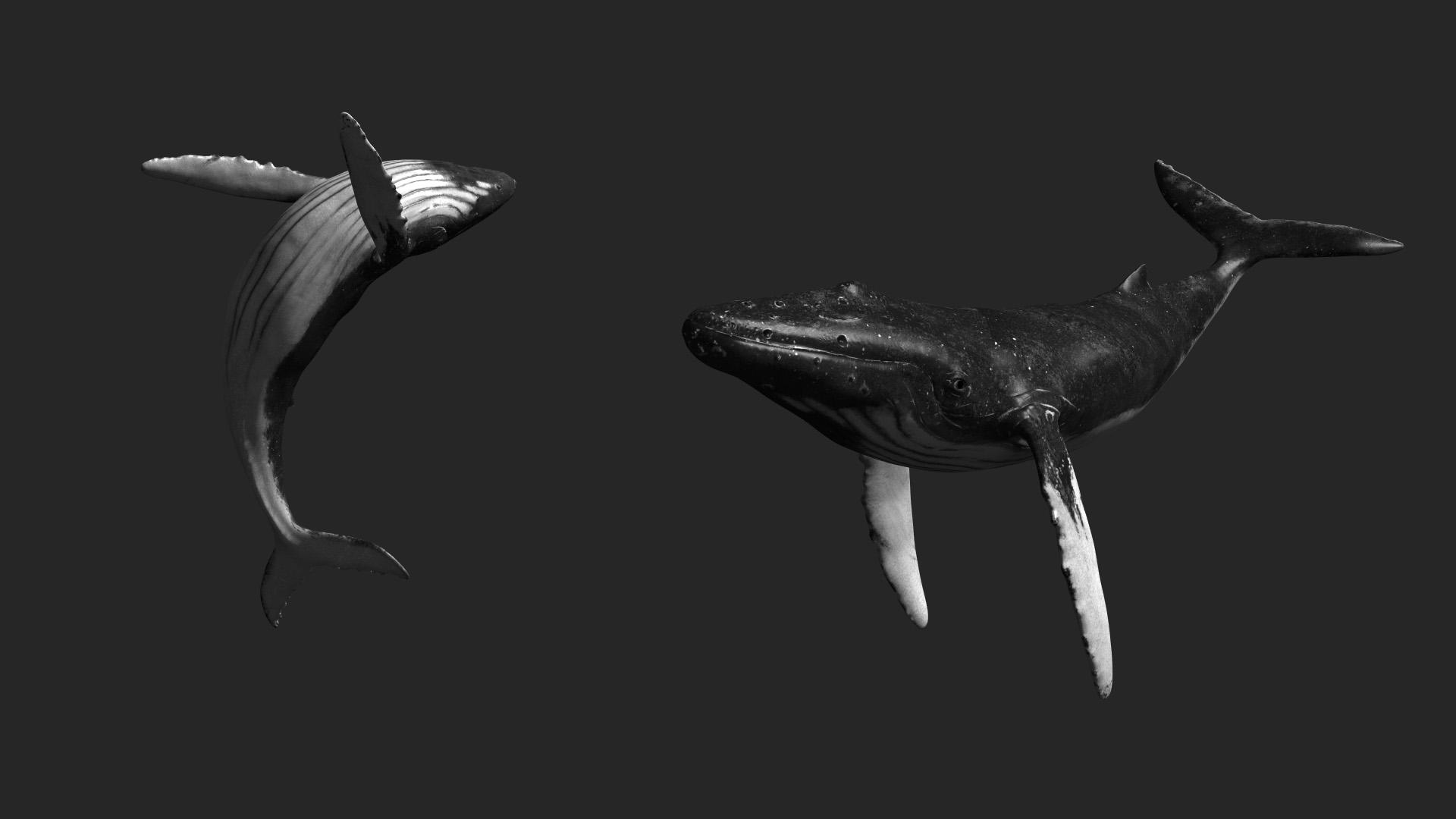 whale 3d asset